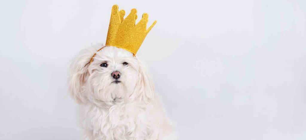 viste a tu mascota de rey mago